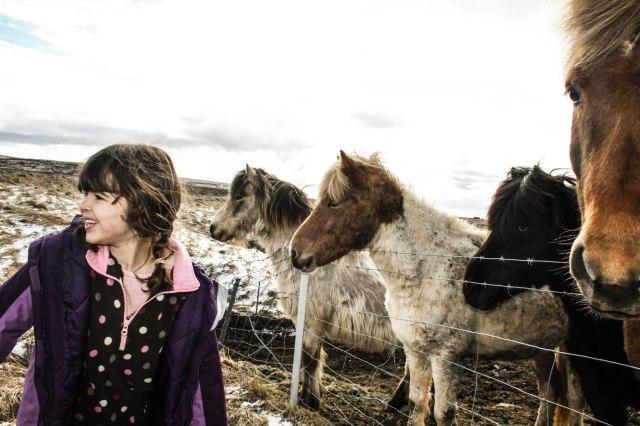 Icelandic ponies, Iceland, wildlife, nature
